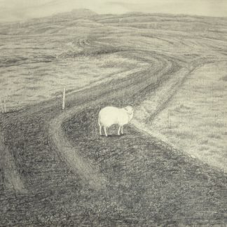 Sheep - Cathy Durso